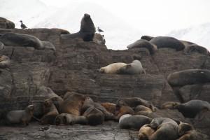 visita a la Isla de los Lobos.